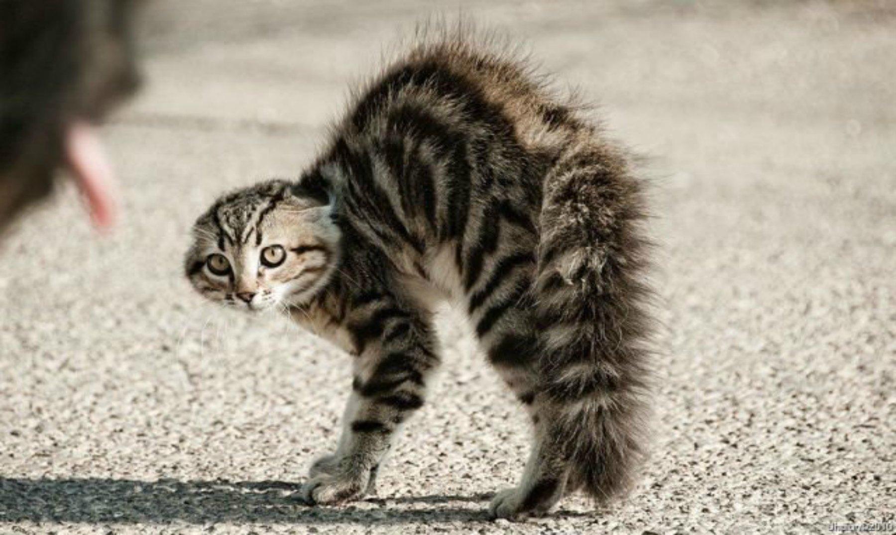 Gatos asustados ¡no te pierdas sus reacciones!