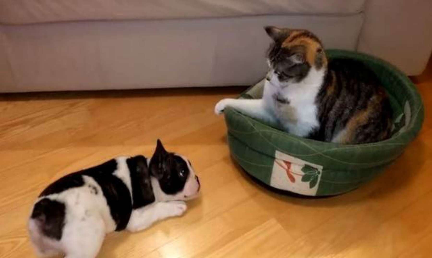 Este perrito reclama su cama que es ocupada por un gato for Cama ocupada