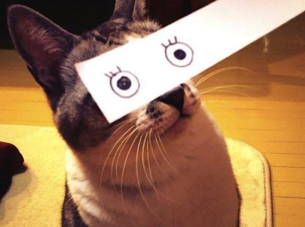 gato ojos dibujados