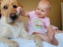 11 Grandes y adorables perros cuidando de pequeños humanos
