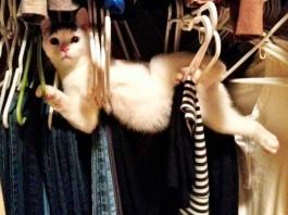 17 Animales que no se llevan muy bien con los muebles de casa