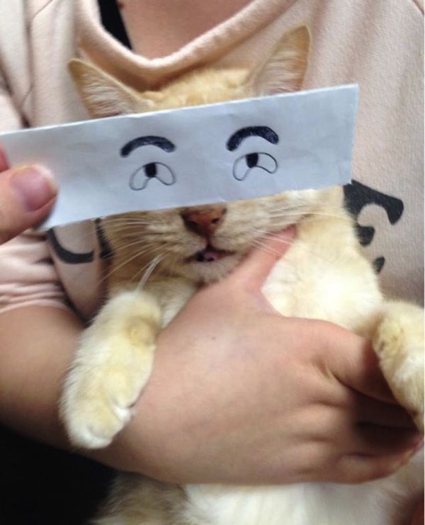 gato ojos papel