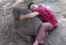 El bebé elefante que adora jugar con las personas