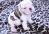El cachorro más adorable del mundo intentando aullar