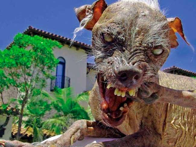 Concurso de perros feos