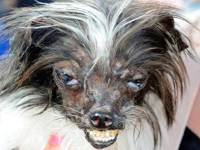 Los perros mas feos del mundo