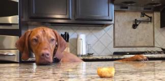 No te pierdas lo que hace este perro cuando se queda solo