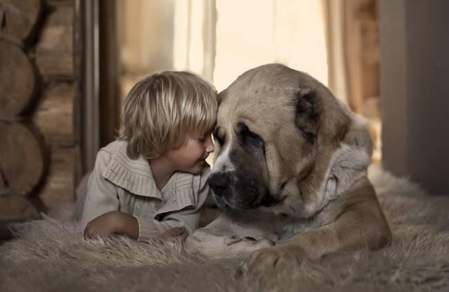 Perro cuidando bebe 10