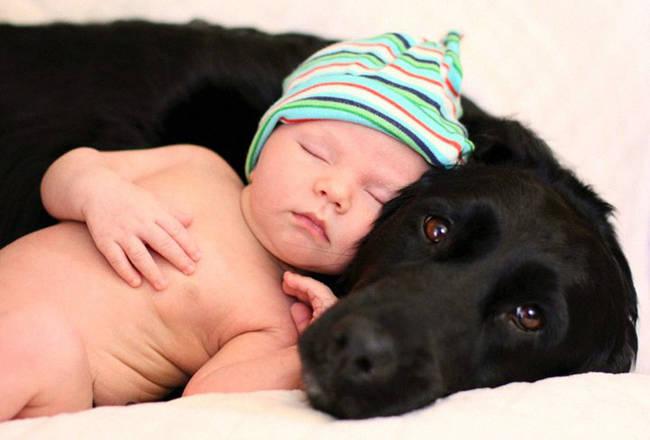 Perro cuidando bebe 11