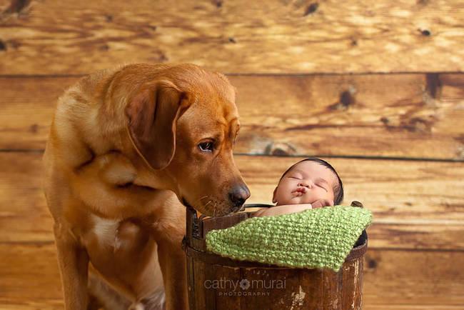 Perro cuidando bebe 2