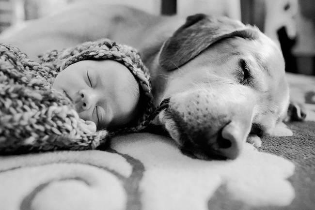Perro cuidando bebe 3