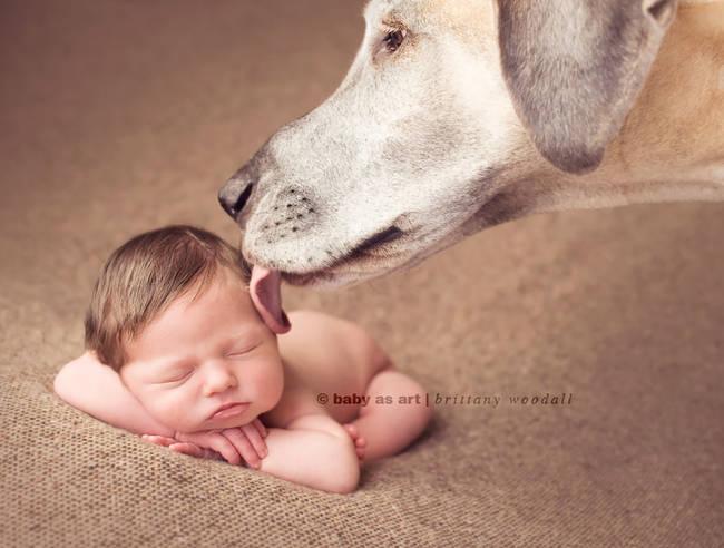 Perro cuidando bebe 4