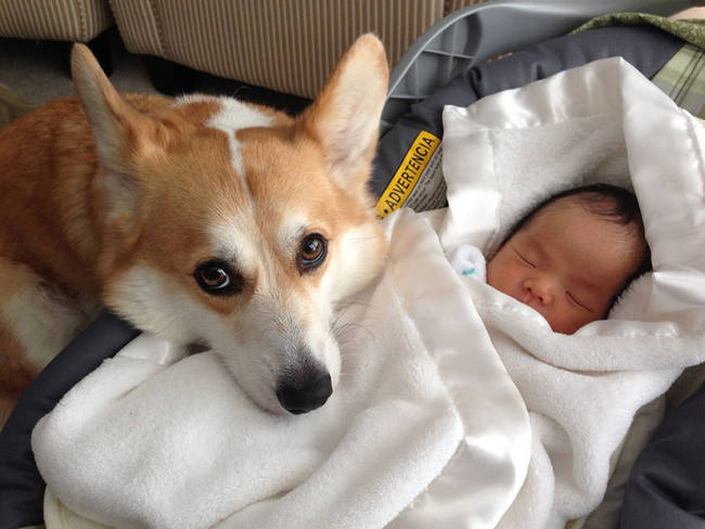 Perro cuidando bebe 6