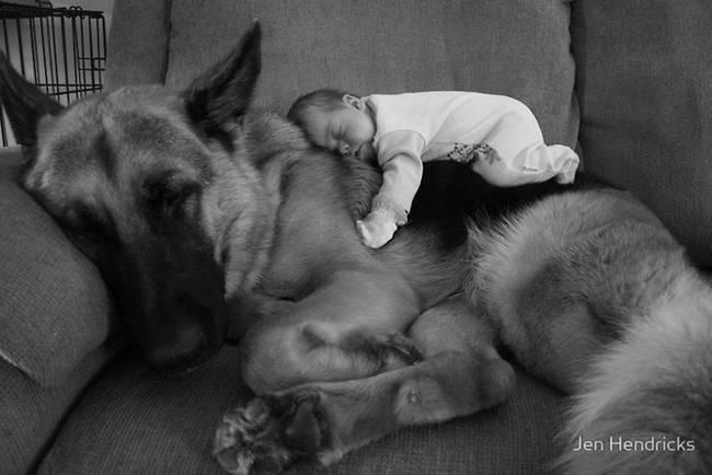 Perro cuidando bebe 7