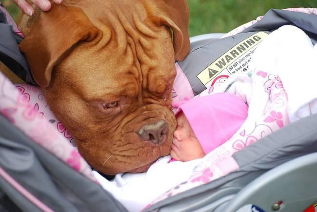 Perro cuidando bebe 8