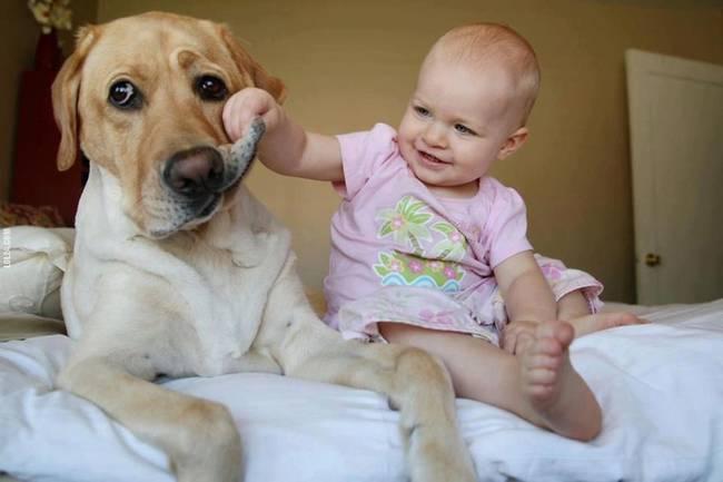 Perro cuidando bebe 9