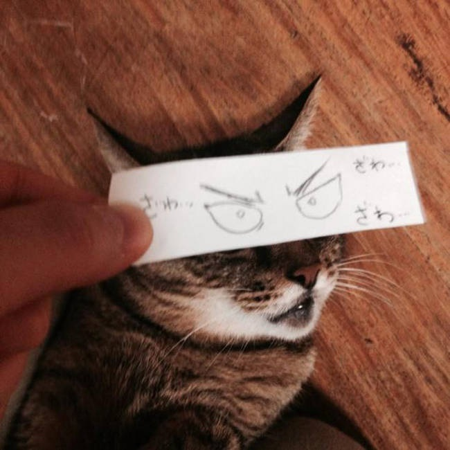 gato gracioso
