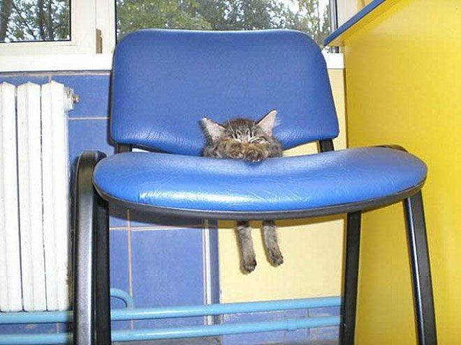 pets-using-furniture-wrong-10