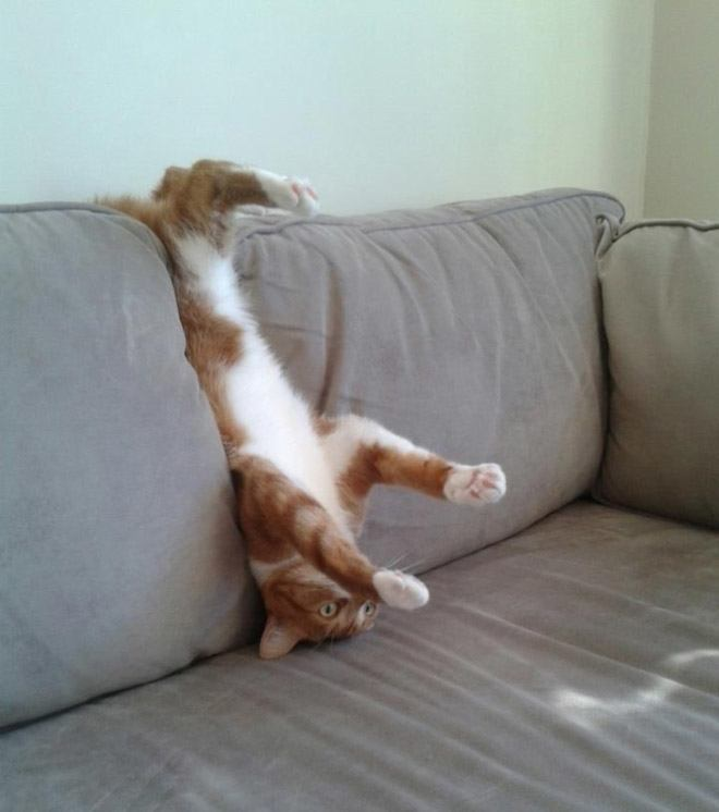 pets-using-furniture-wrong-12