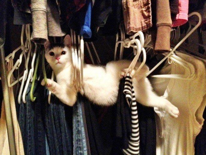 pets-using-furniture-wrong-16