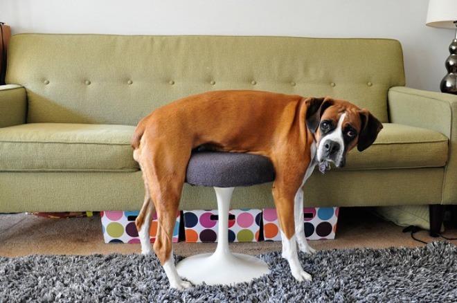 pets-using-furniture-wrong-18
