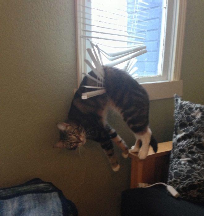pets-using-furniture-wrong-19