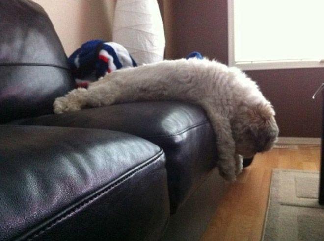 pets-using-furniture-wrong-2