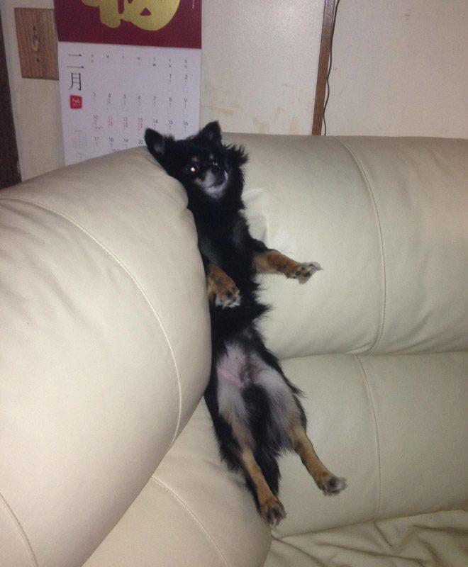 pets-using-furniture-wrong-22