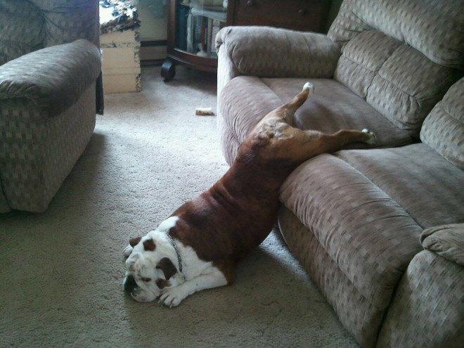 pets-using-furniture-wrong-5