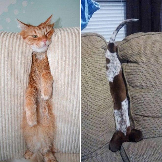 pets-using-furniture-wrong-6