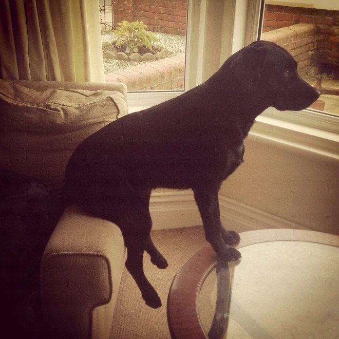 pets-using-furniture-wrong-8