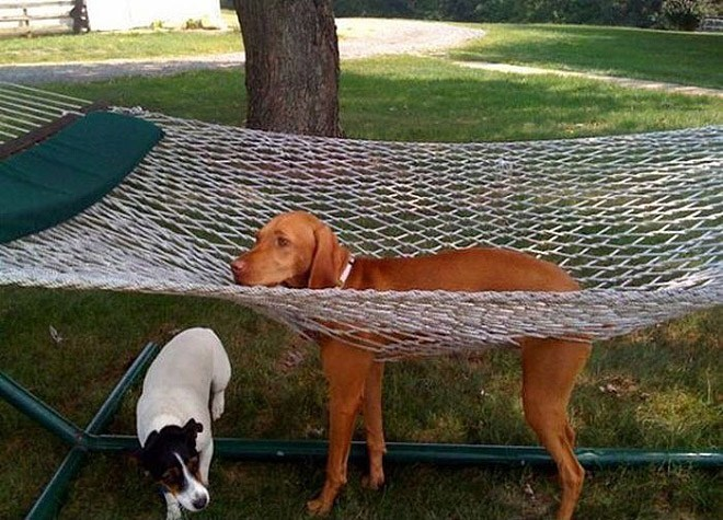 pets-using-furniture-wrong-9