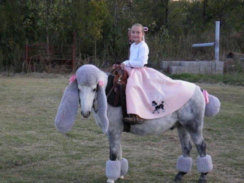 caballos1