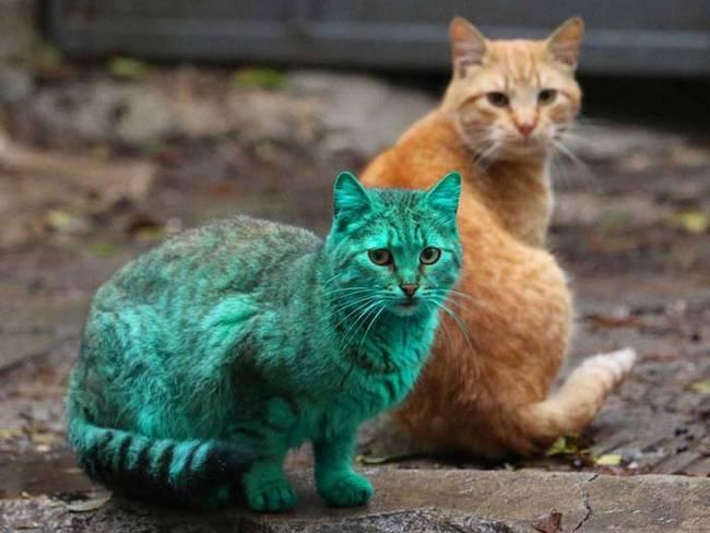 gato_verde2