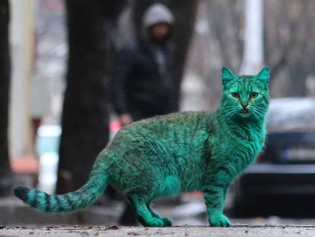 gato_verde3