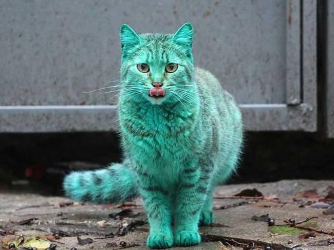 gato_verde4