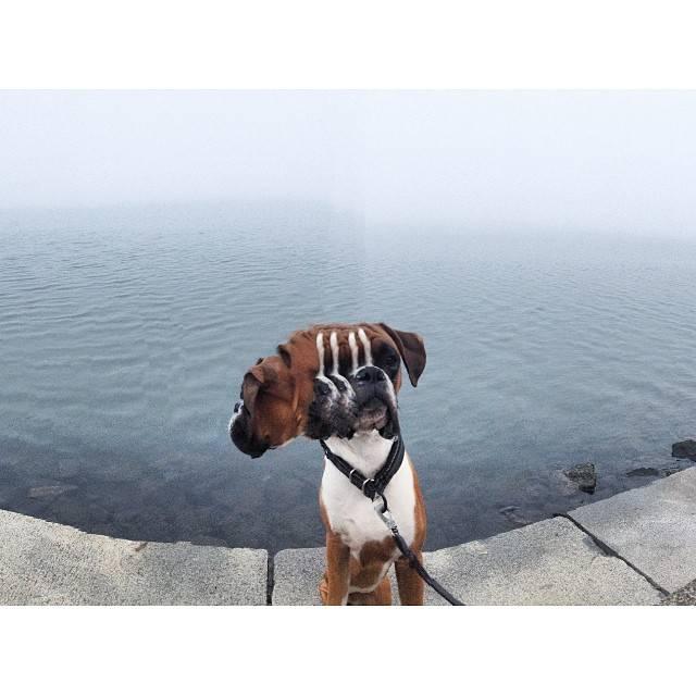 perros_6