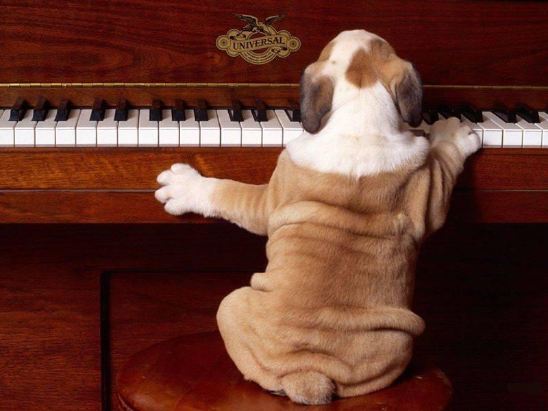 perro super gracioso