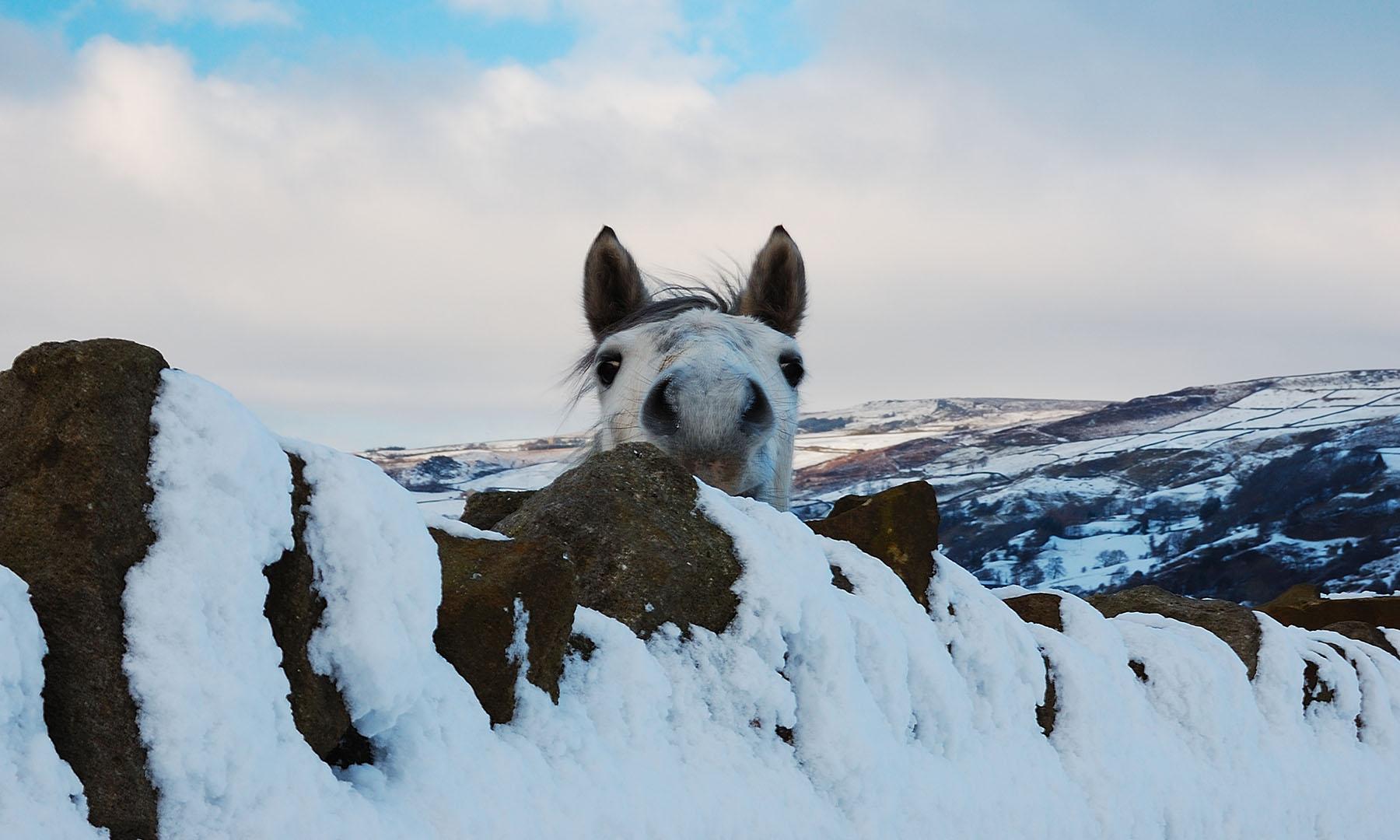 animales super graciosos fotografia (11)