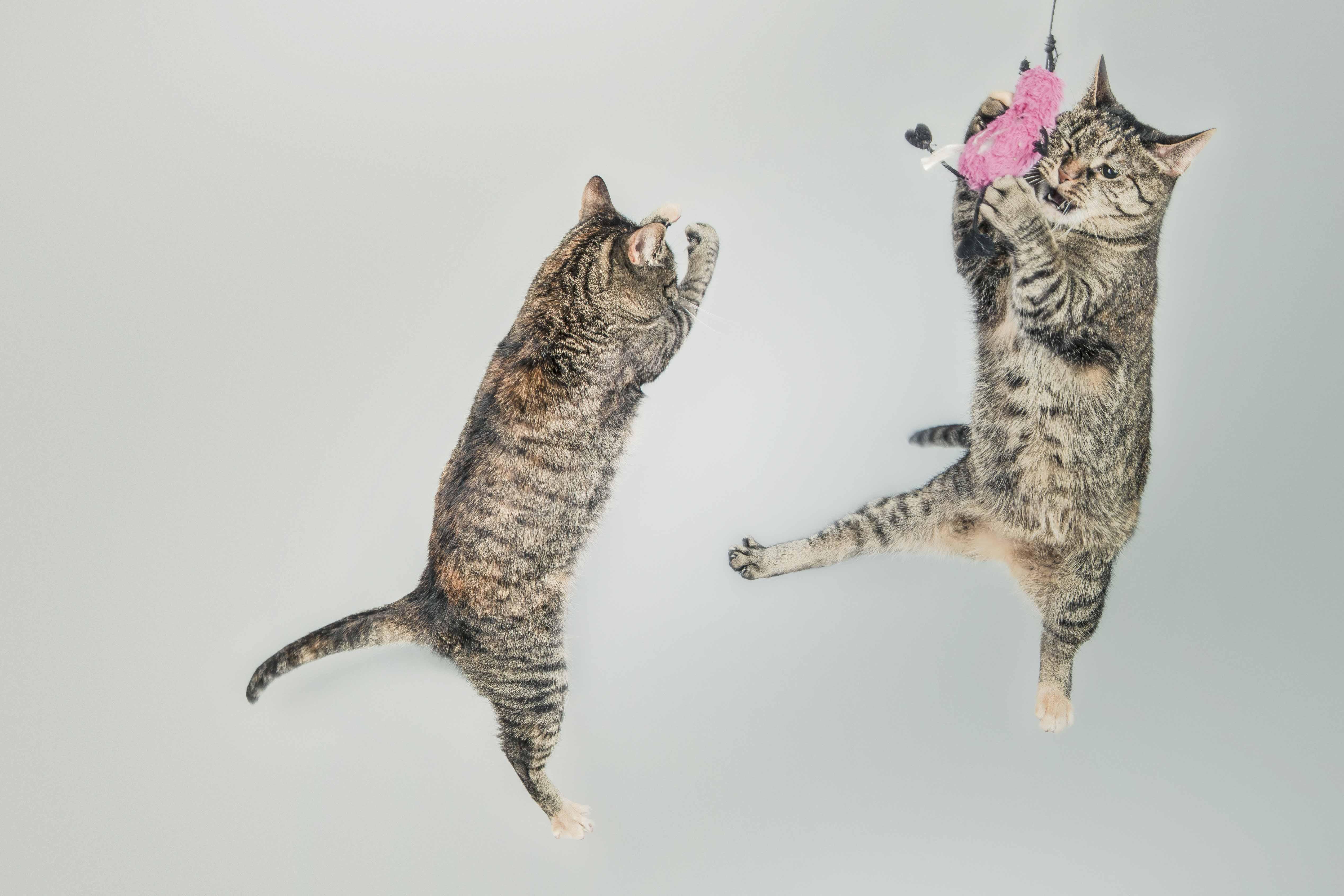 animales super graciosos fotografia (13)