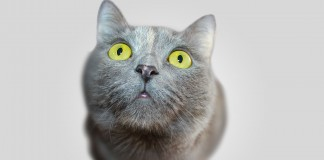 portada animal super gracioso fotografia mypictours