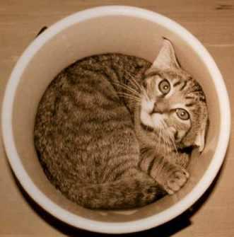 gato6