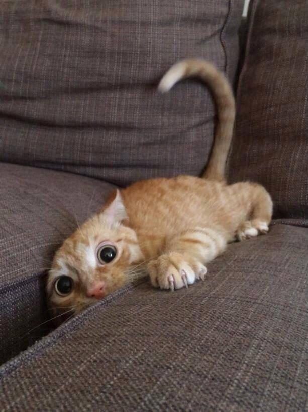 gatos_1