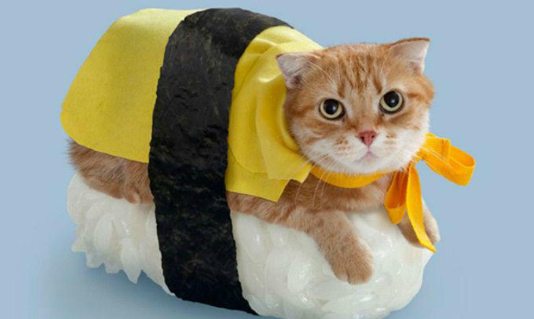 25 disfraces de gatos graciosos y divertidos - Disfraces de gatos para ninos ...