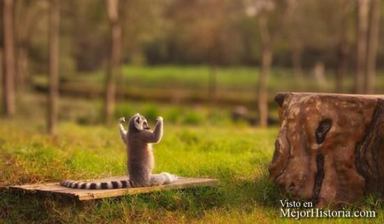 30-Animales-Que-Hacen-Yoga-Mejor-Que-Tu.-¿No-Te-Lo-Crees-Compruébalo.-27