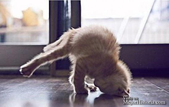 30-Animales-Que-Hacen-Yoga-Mejor-Que-Tu.-¿No-Te-Lo-Crees-Compruébalo.-29