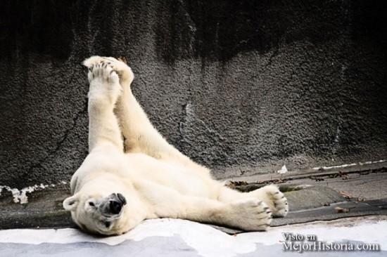 30-Animales-Que-Hacen-Yoga-Mejor-Que-Tu.-¿No-Te-Lo-Crees-Compruébalo.-30