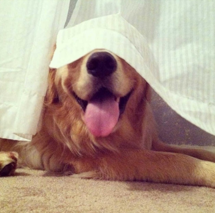 Perros-que-fayaron-al-esconderse-1-730x722