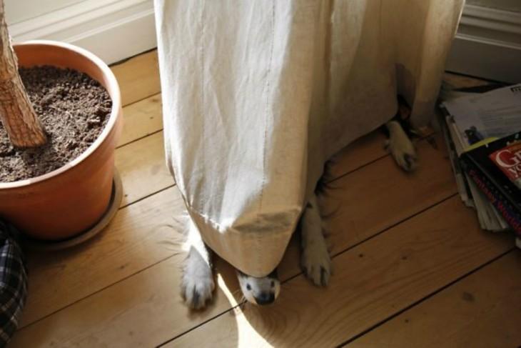 Perros-que-fayaron-al-esconderse-2-730x487