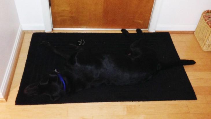 Perros-que-fayaron-al-esconderse-4-730x413